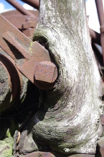 2013 Holz 1, Photographie von Sylvia Stieler